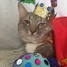 Photo #1 - A King Furr Me
