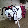 Photo #1 - Goblin as Abby Sciuto NCIS Forensic Scientist