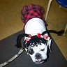 Photo #2 - Abby Sciuto NCIS Forensic Scientist