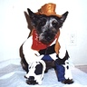 Photo #2 - Ragtime Cowboy Al