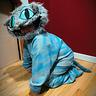 Photo #5 - Cheshire Cat