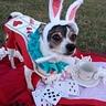 Photo #2 - The White Rabbit