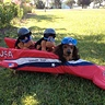 Photo #2 - Larry and the bobsled
