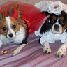 "Photo #1 - Lucy ""the little devil"" and Abby ""the angel"""