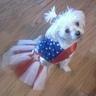 Photo #3 - Miss America