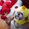 Photo #2 - Bella and Spencer angry bird dogs