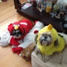 Photo #5 - Angry Birds Dogs