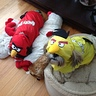 Photo #1 - Angry Birds Dogs