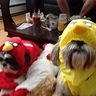 Photo #3 - Angry Birds Dogs