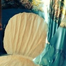 Photo #6 - Giant shell
