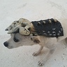 Photo #1 - Army of Darkness Dog