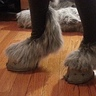 Photo #4 - Closeup of the hooves