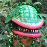 Photo #5 - Audrey II