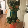 Photo #4 - Back of Audrey II costume