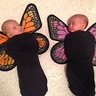 Photo #1 - Baby Butterflies