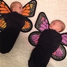 Photo #2 - Baby Butterflies