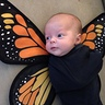 Photo #4 - Baby Butterflies