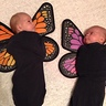 Photo #5 - Baby Butterflies