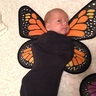 Photo #6 - Baby Butterflies