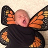Photo #7 - Baby Butterflies
