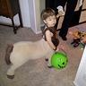 Photo #3 - Baby Centaur