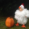 Photo #2 - Baby Chicken