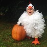 Photo #3 - Baby Chicken