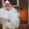 Photo #4 - Baby Chicken