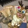 Photo #2 - Baby Deer