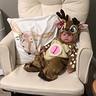 Photo #5 - Baby Deer
