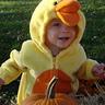 Photo #1 - Baby Duck