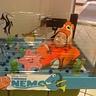 Photo #1 - Baby Nemo