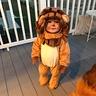 Photo #1 - Baby Lion
