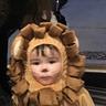 Photo #7 - Baby Lion