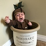 Photo #2 - Mandrake