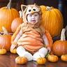 Photo #1 - Baby owl