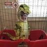 Photo #1 - Baby T-Rex