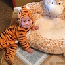 Photo #2 - Baby Tiger