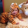 Photo #3 - Baby Tiger