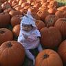 Photo #2 - Unicorn in pumpkin patch
