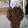 Photo #2 - Bald Eagle