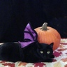 Photo #2 - Bat Cat