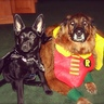 Photo #1 - Bat Dog and Robin