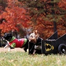 Photo #2 - Batman (batdog?) and Robin