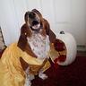 Photo #2 - Lotus as Belle
