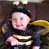 Photo #2 - Bee
