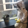 Photo #7 - Bee Keeper and his Bees