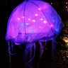 Photo #2 - Bioluminescent Jellyfish