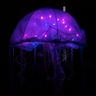 Photo #3 - Bioluminescent Jellyfish