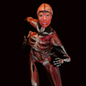 Photo #1 - Body Worlds